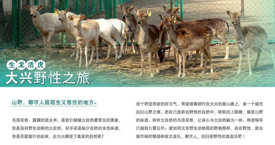 北京野生动物园  (2hr)